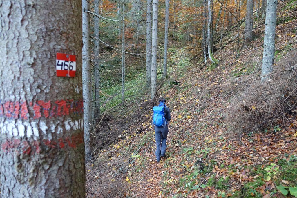 Der Anstieg durch den Wald ist relativ steil. Foto: Martin Heppner