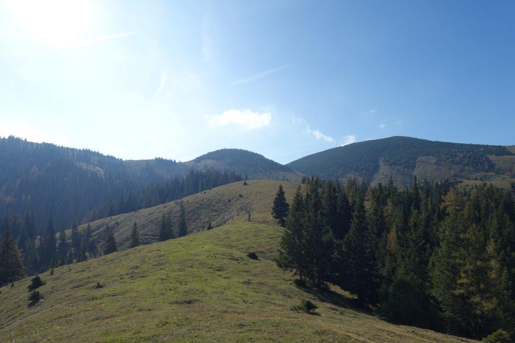 Über der Baumgrenze herrscht Almlandschaft vor. Foto: Martin Heppner