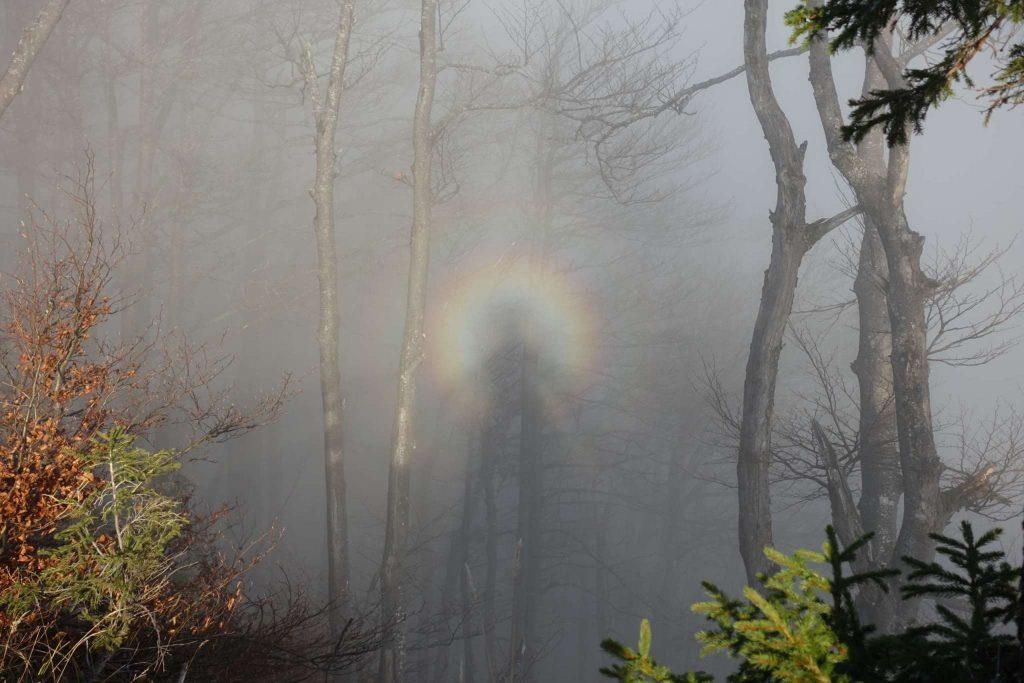 Glorie: Mit der Sonne hinter uns wird im Nebel eine Glorie erzeugt!