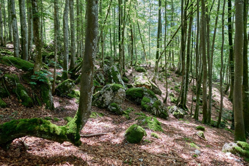 Abstieg durch einen schönen Blätterwald (Foto: Martin Heppner)