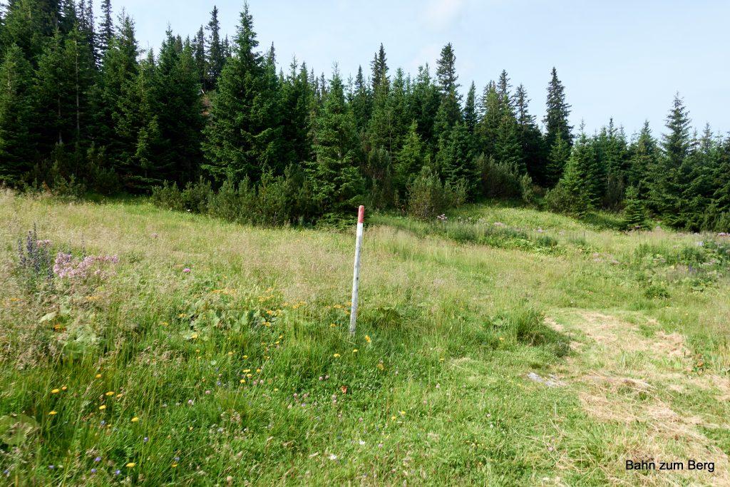 Am Ende der Wiese nach links. 3 Stecken weit. Foto: Martin Heppner