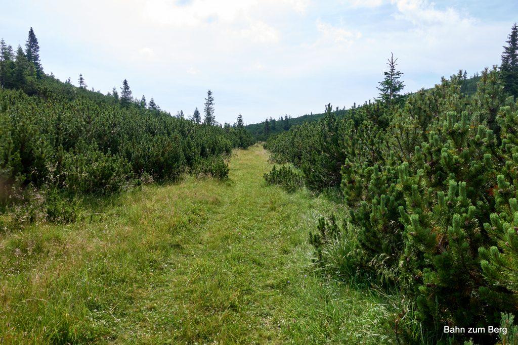 Weg zwischen Weißkogel und Jakobskogel. Foto: Martin Heppner