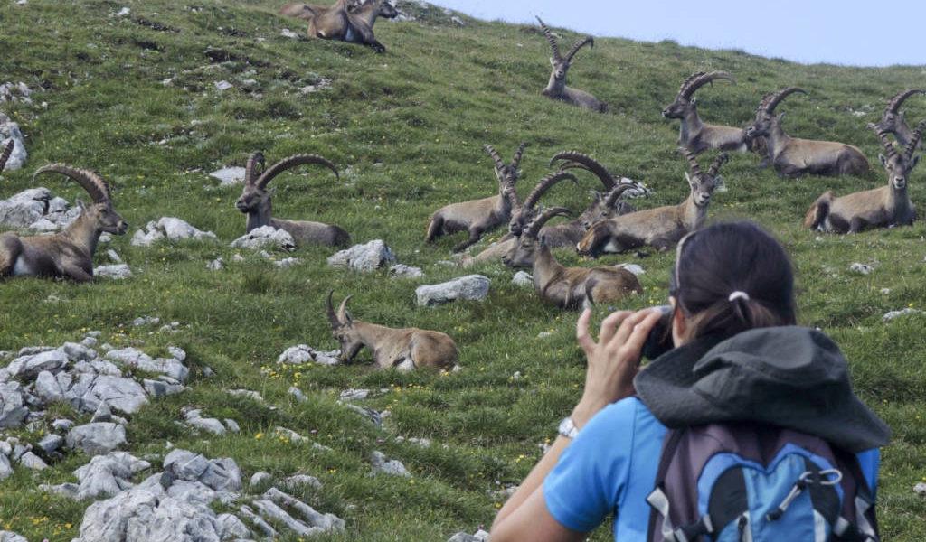 Fotosession mit dem König der Alpen. | Foto: Johannes Reinprecht