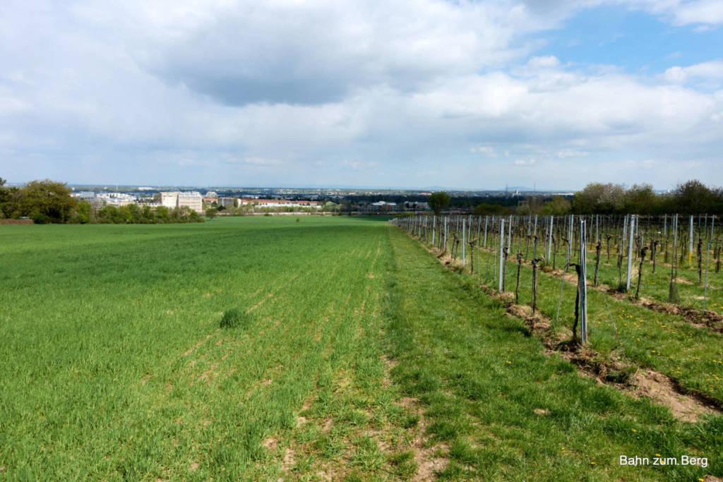 Felder Weingärten. Foto: Martin Heppner