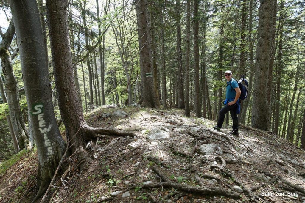 Abstieg durch den steilen Wald nach Seewiesen.