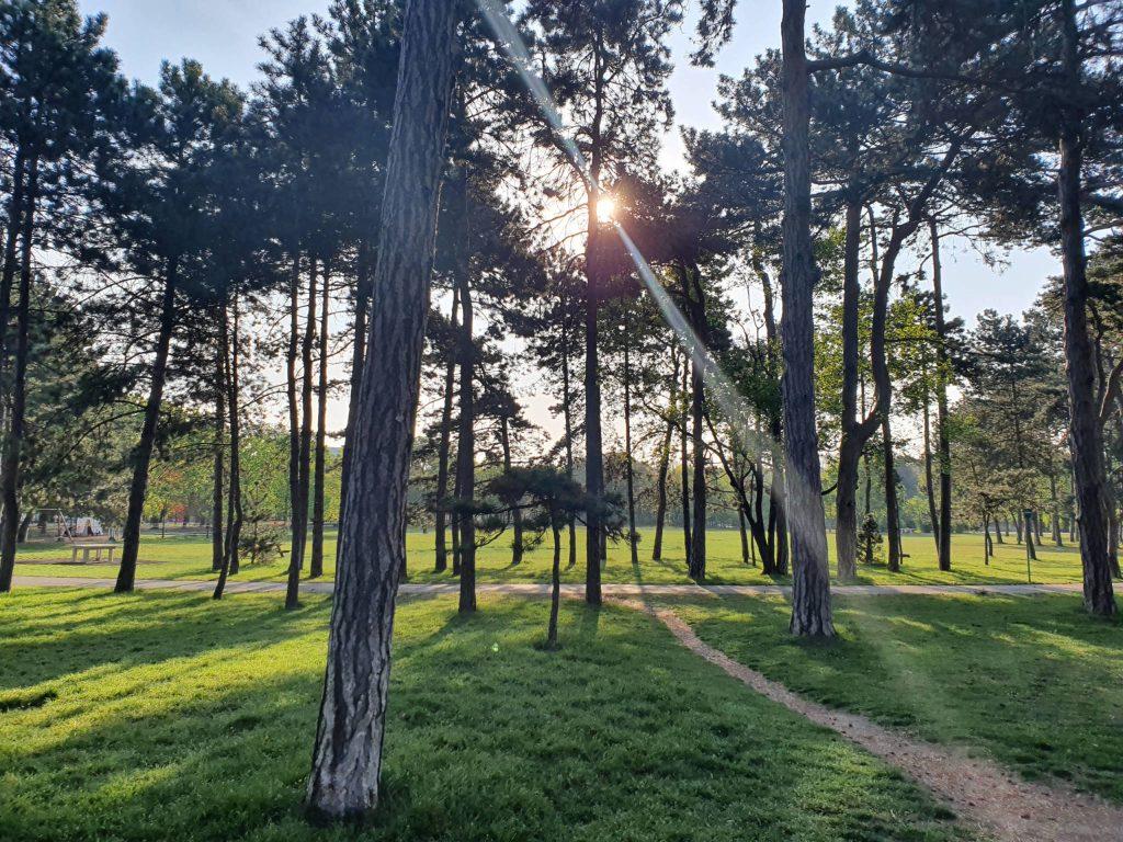 Park. Foto: Christoph Hammerl