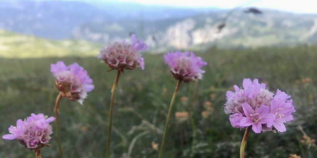 Nachhaltig und umweltverträglich in die Berge Titelbild. Foto Veronika Schöll