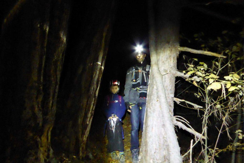Kurz nach 17:00 ist es jetzt im November im Wald schon stockdunkel.