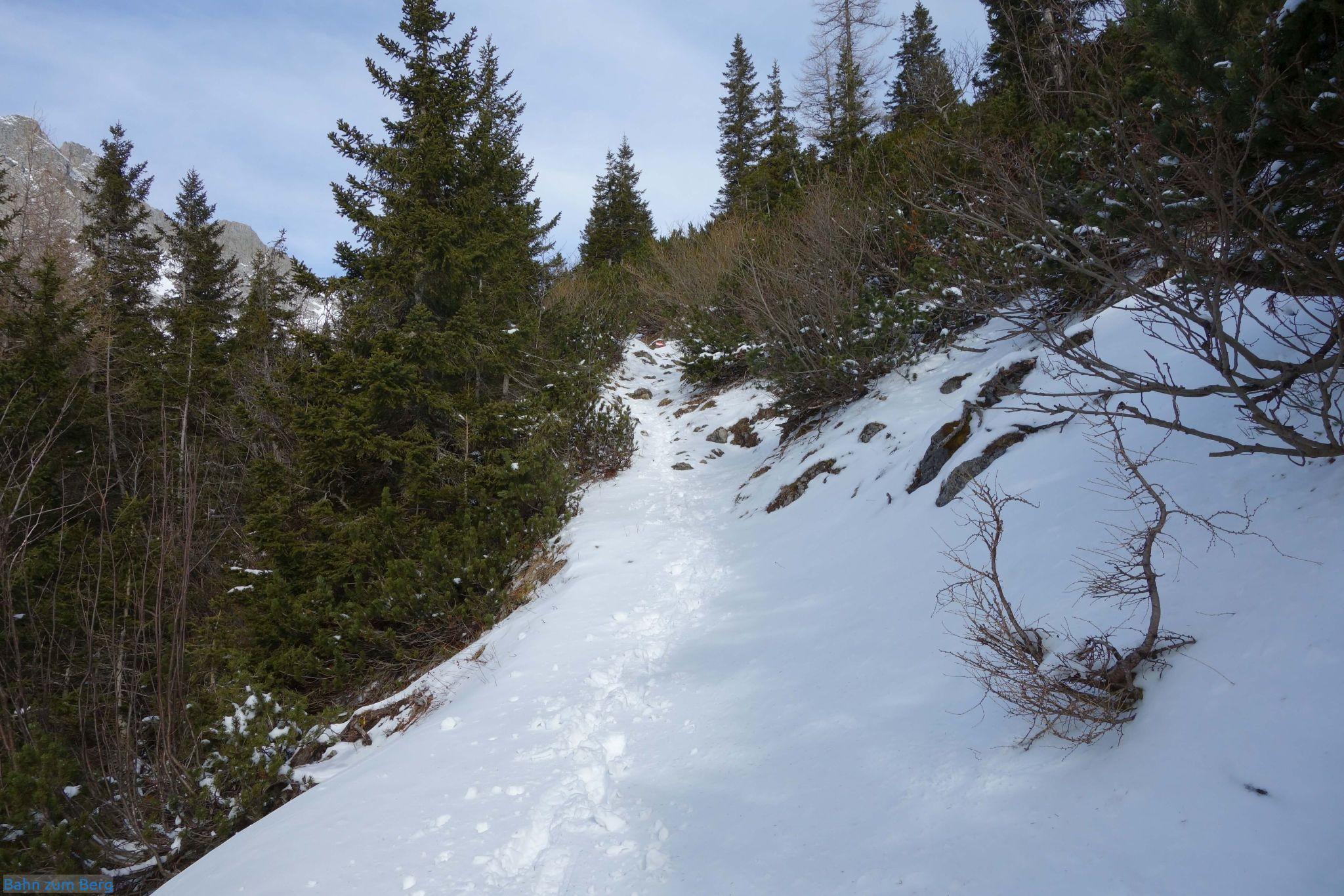 Bis zum Lamingsattel geht es angenehm durch den Wald bergauf.