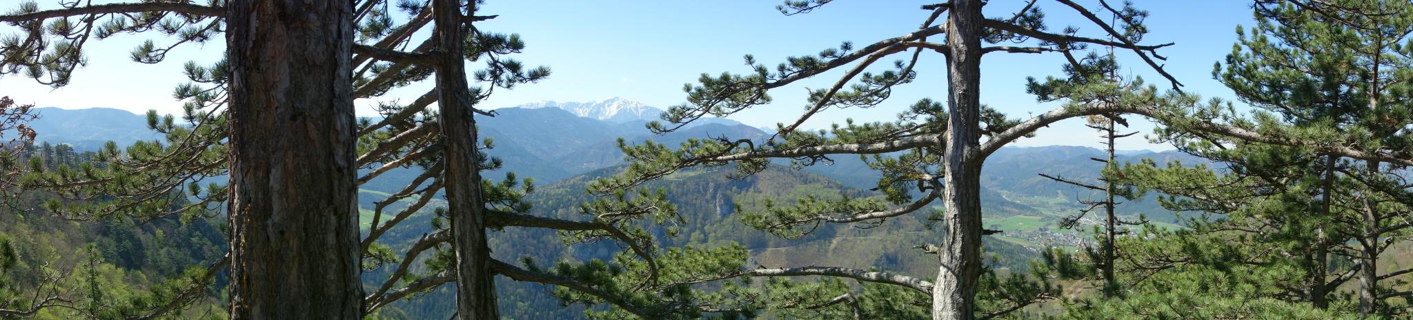 Aussicht durch den Wald auf den Schneeberg und auf Pernitz.
