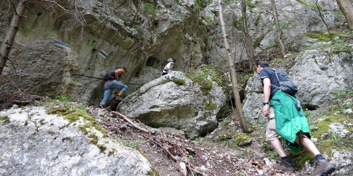 Waldeggersteig und Krumme Ries