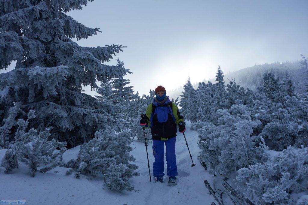 Den Durchlass durch die letzten paar Meter Latschen erkennt man an den abgeschnittenen Ästen. Die Farbmarkierungen sind unterm Schnee.