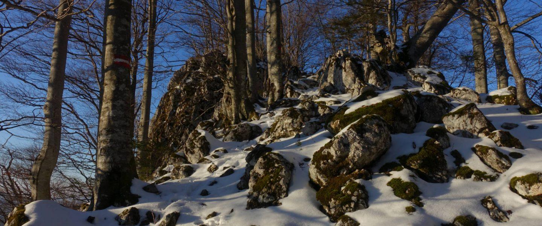 Gipfelbereich Falkenstein
