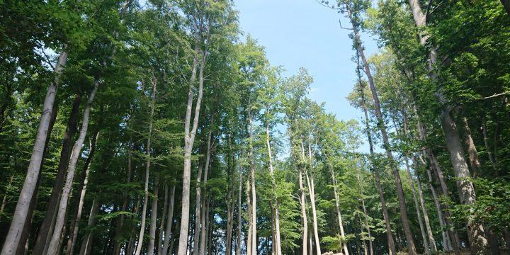Erholung im Lainzer Tiergarten