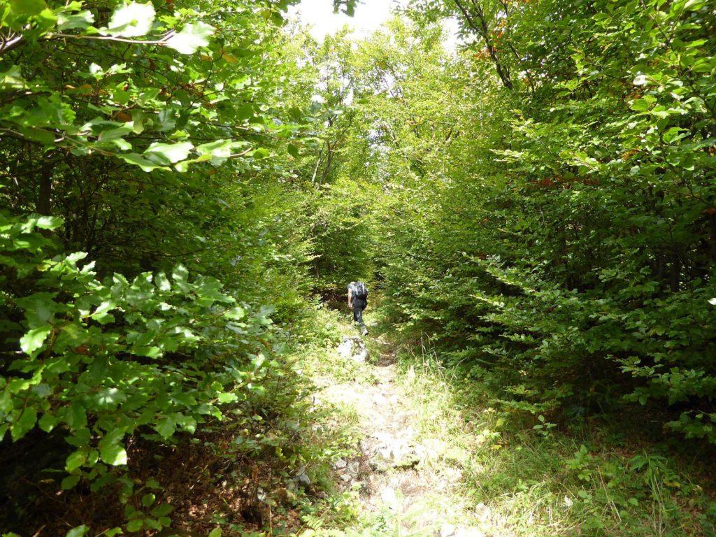 Nach dem Jägerherz geht man durch dichtes Buschwerk gespickt mit abgegangenen Felsbrocken.