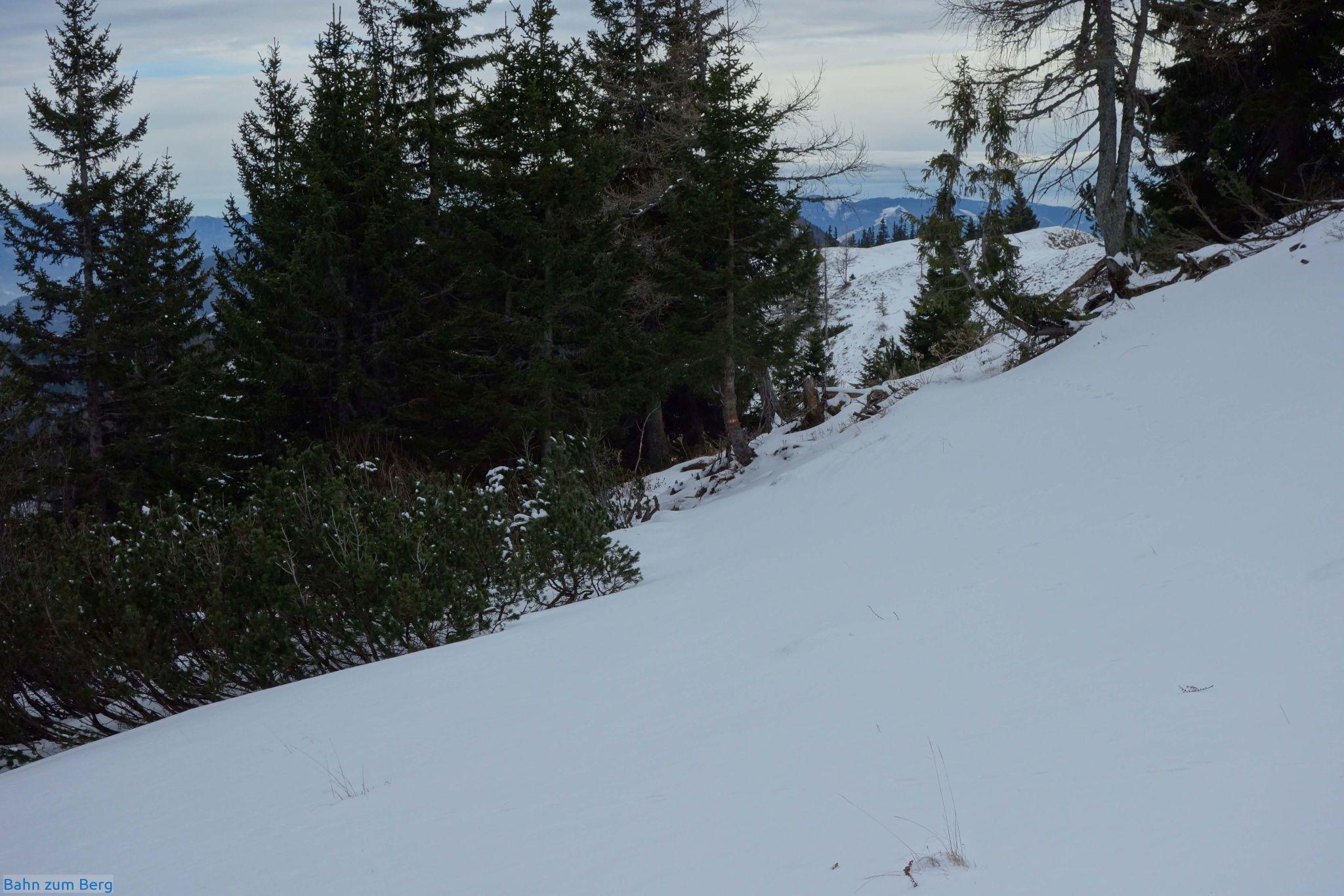 Über die erste Markierung seit langem (am Stamm des Bäumchens in der Mitte) freue ich mich umso mehr, als ich zu diesem Zeitpunkt ein imaginäres Zwiegespräch mit dem Fuchs führe, ob er mich mit seiner Spur eh richtig leitet.