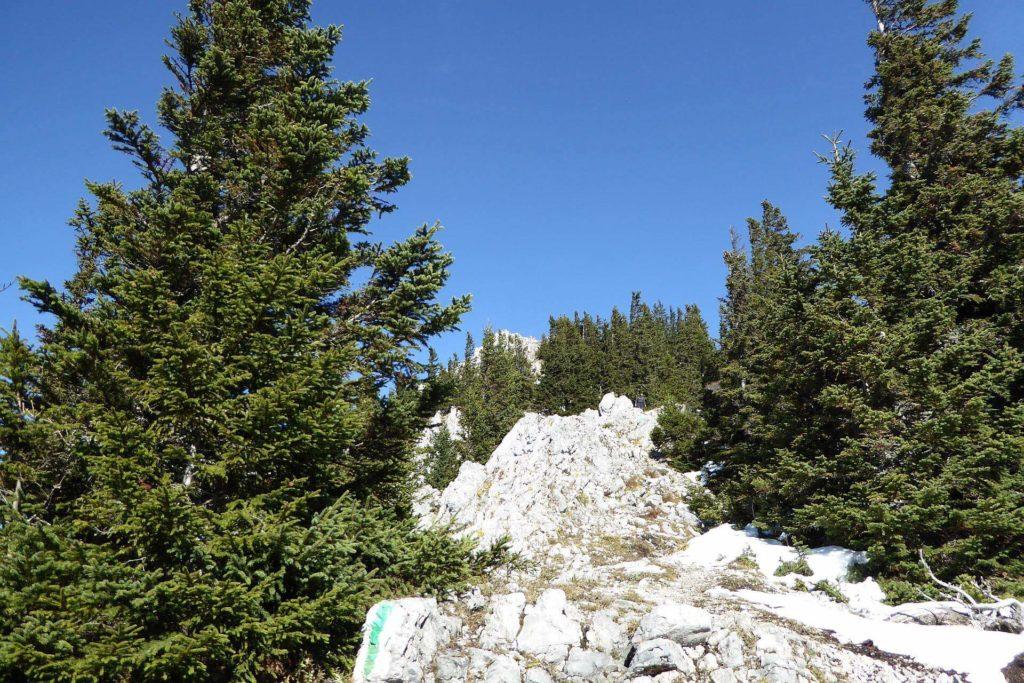Die letzten 150HM sind felsig, sehr schön zu gehen. Für Kinder eine nette Strecke mit etwas klettern (wenn sie nicht bei der Hütte geblieben sind).