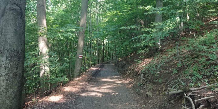 Stadtwanderweg 2 über den Hermannskogel