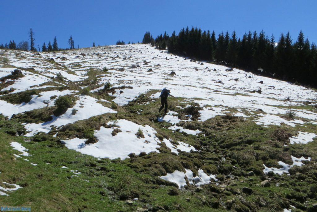 Der Aufstieg erfolgt am einfachsten über die Wiese auf der Nordseite des Schneebergs. Foto: Martin Heppner