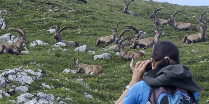 Fotosession mit dem König der Alpen. Foto: Johannes Reinprecht.