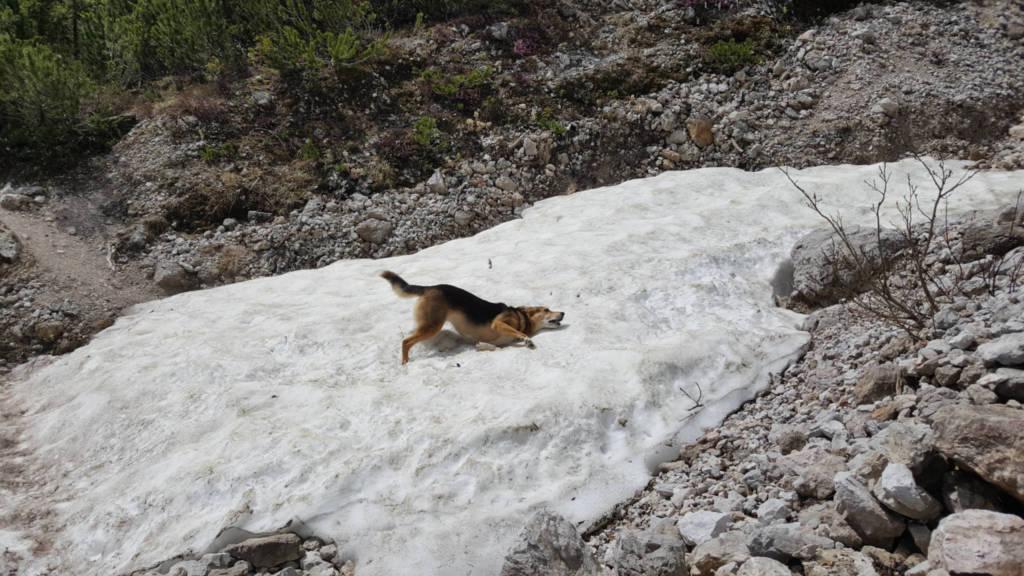 Hund im Schnee. Foto: Julian Kleinknecht