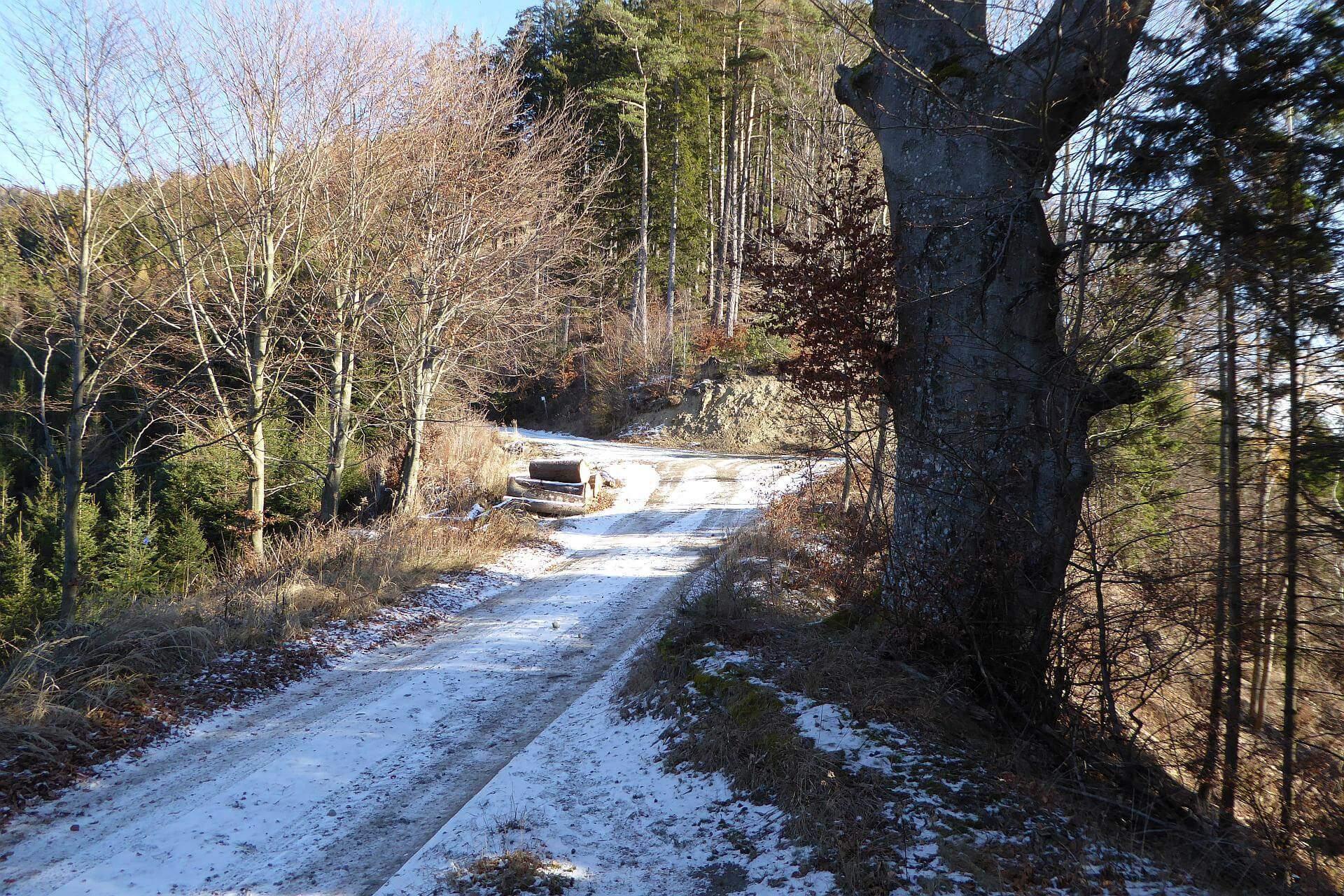 """Der Wanderweg erreicht an dieser Stelle den Sattel. Der markierte Weg führt am Forstweg nach links weg. Der unmarkierte Steig führt direkt, """"zwischen"""" den beiden Forststraßen am Sattel weiter hinauf."""