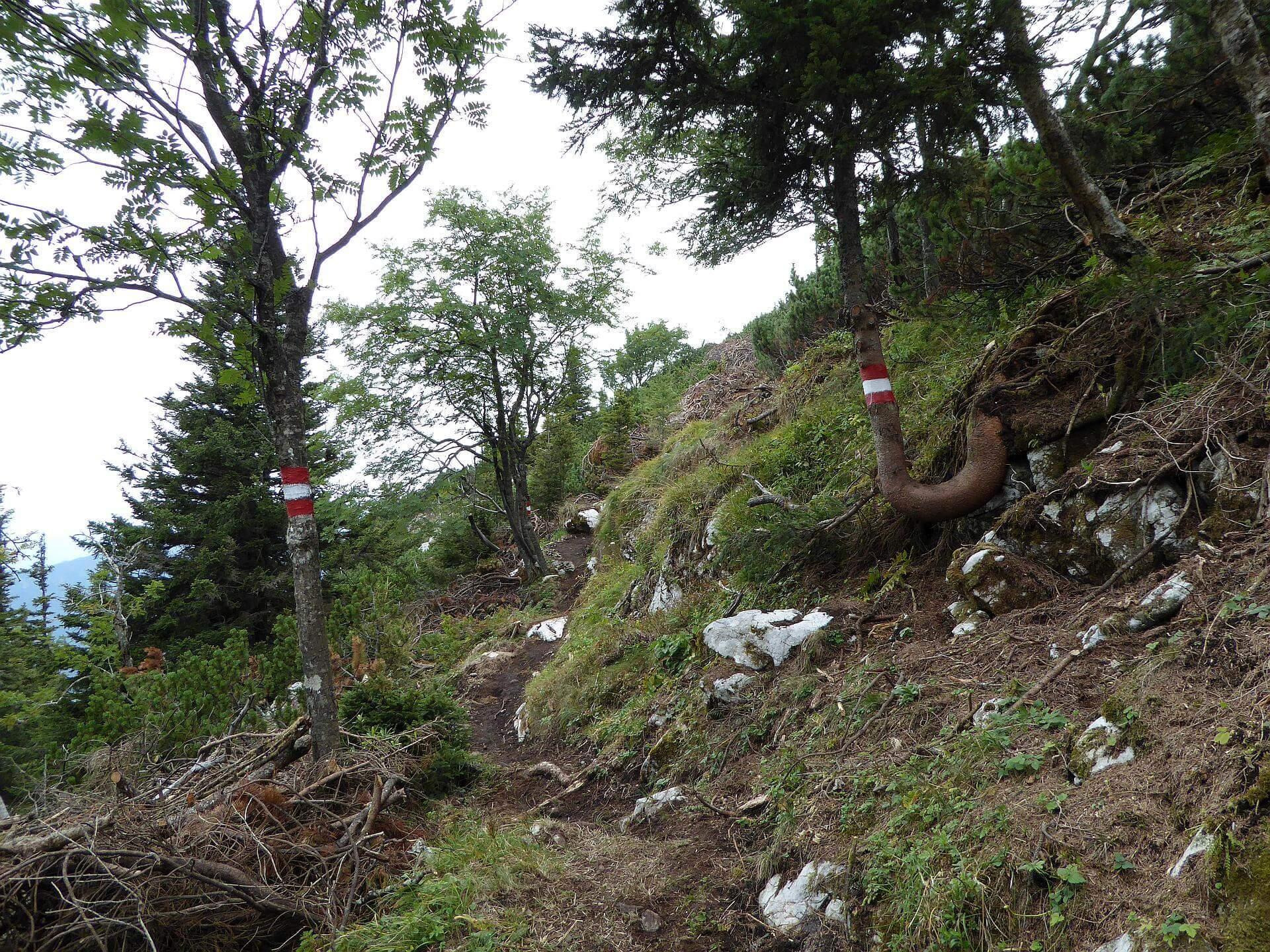 Kurz vor dem Hochlantsch Gipfel gibt es jetzt eine neue Wegführung durch die Latschen. © 2015 HM