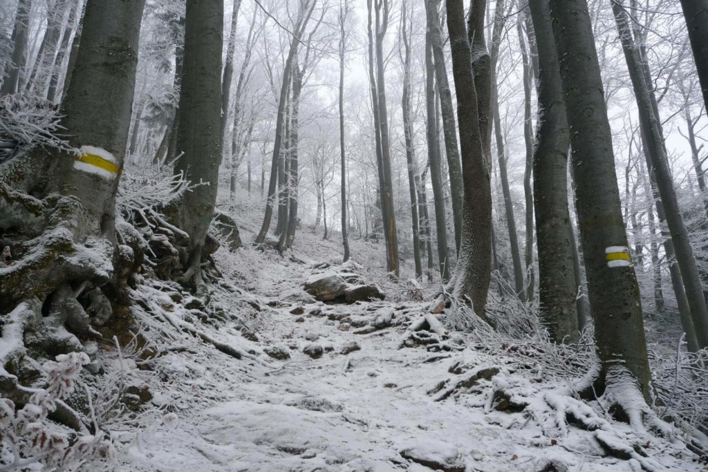 Schöner Waldaufstieg zur Edelweißhütte.