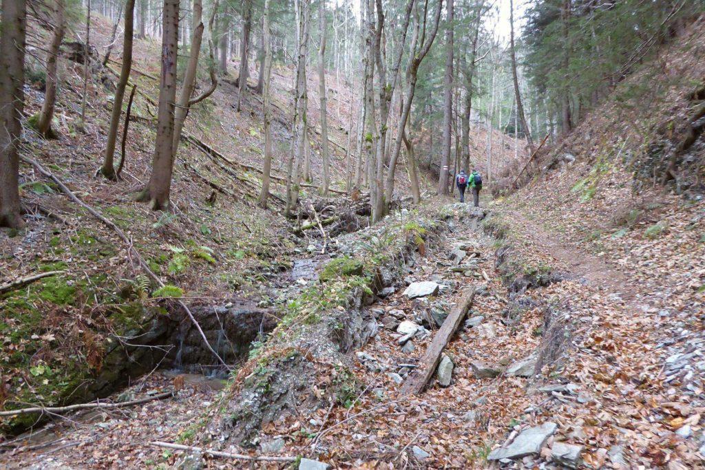 Der Rettenbach ist ein regulierter Wasserlauf. Mir fällt auf, dass es zwischendurch immmer wieder Stellen gibt, an denen er sich nicht in die Regulierung fügt und sich selbst ein Bett sucht.