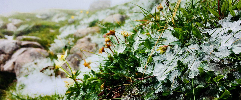 Eis (Fotos: Stefan Hochhold)