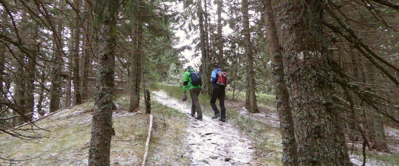 Die letzten Meter zum Gipfel des Tratenkogels.