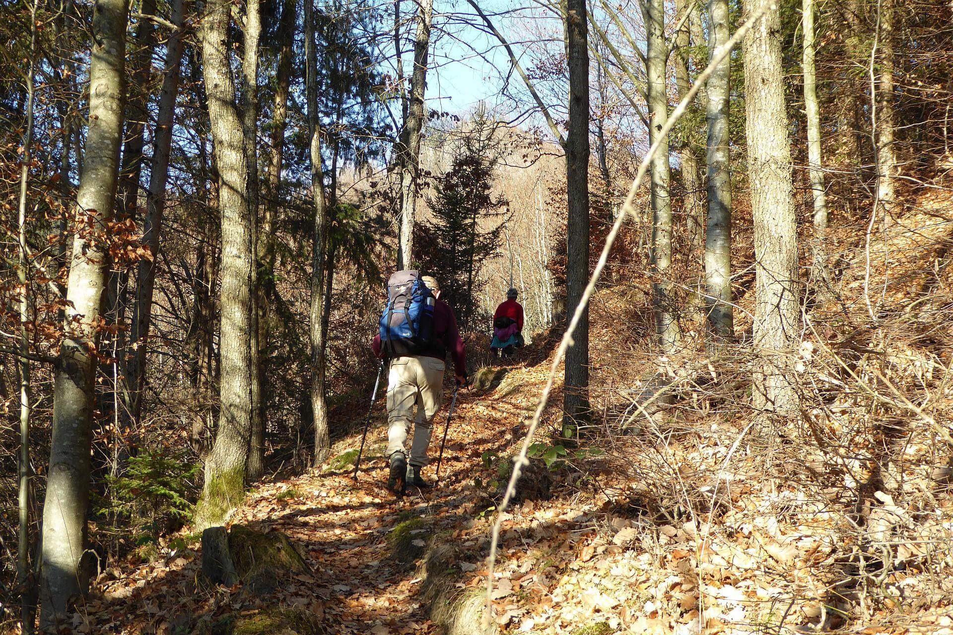 Der Aufstieg führt bis knapp unter dem Gipfel immer durch den Wald.