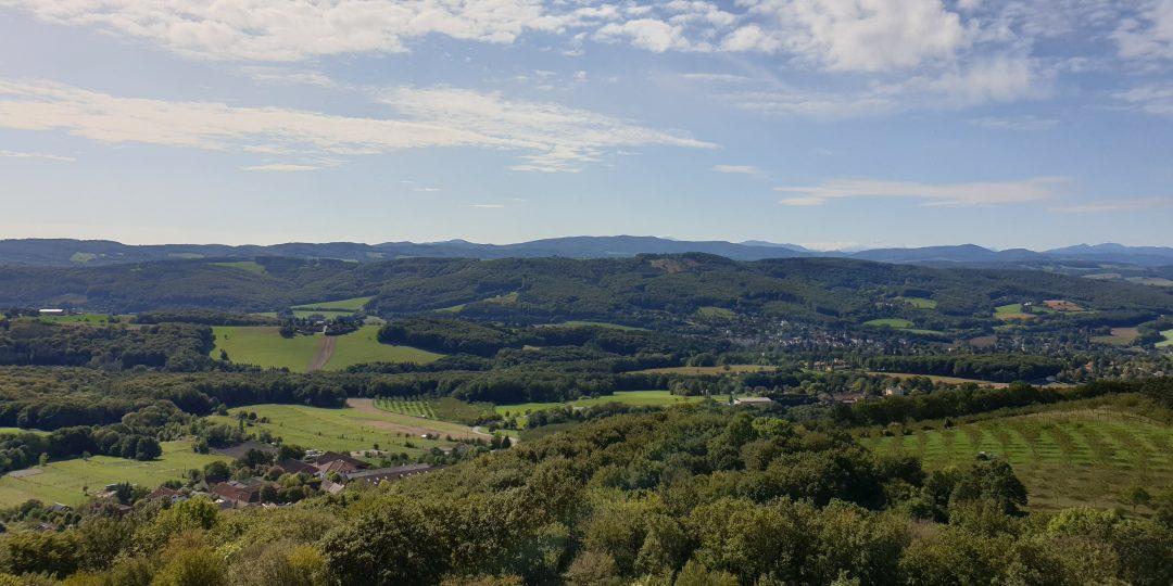 Wienerwald. Foto: Martin Heppner