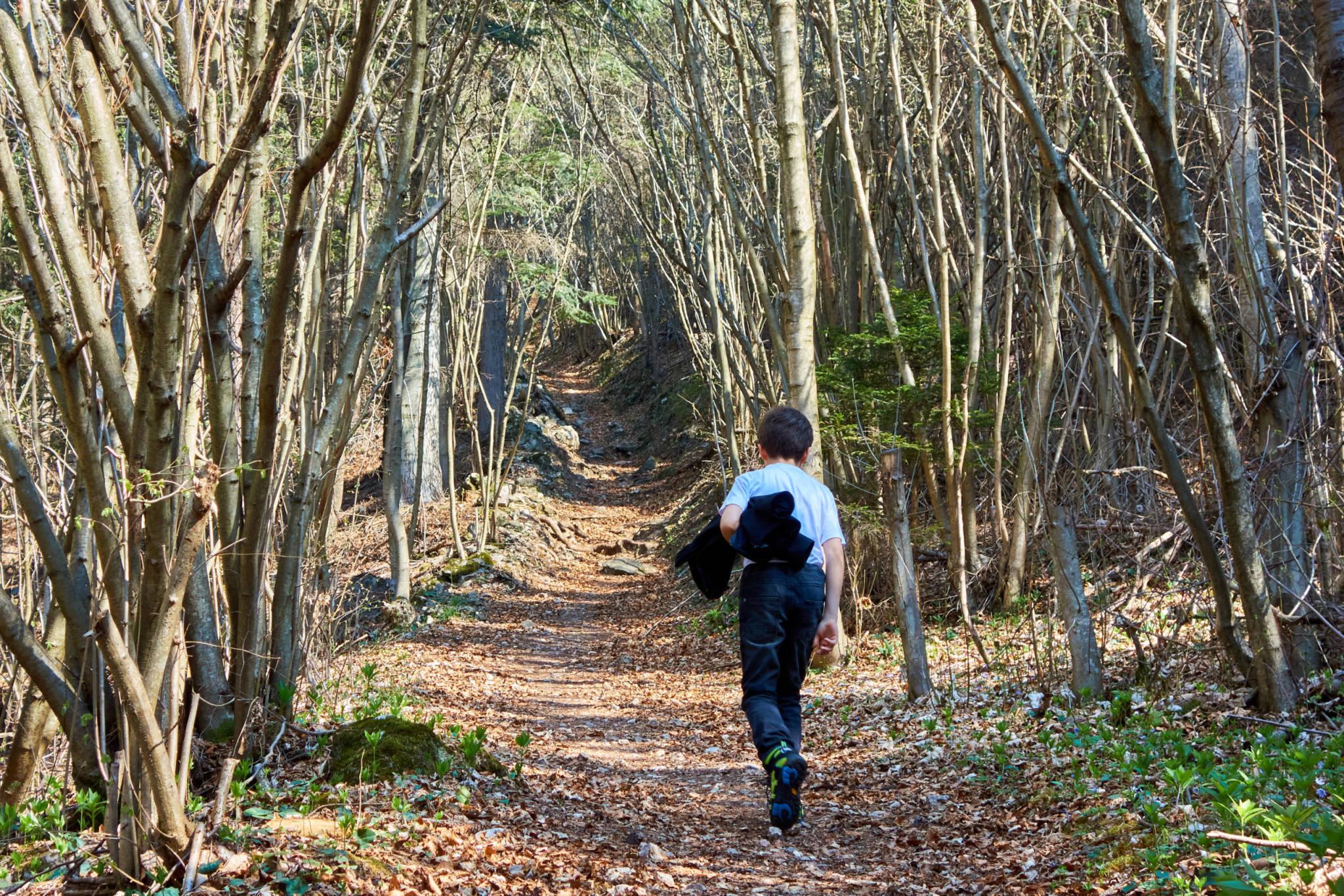 Zu Beginn führt der Weg noch recht beschaulich durch den Wald.