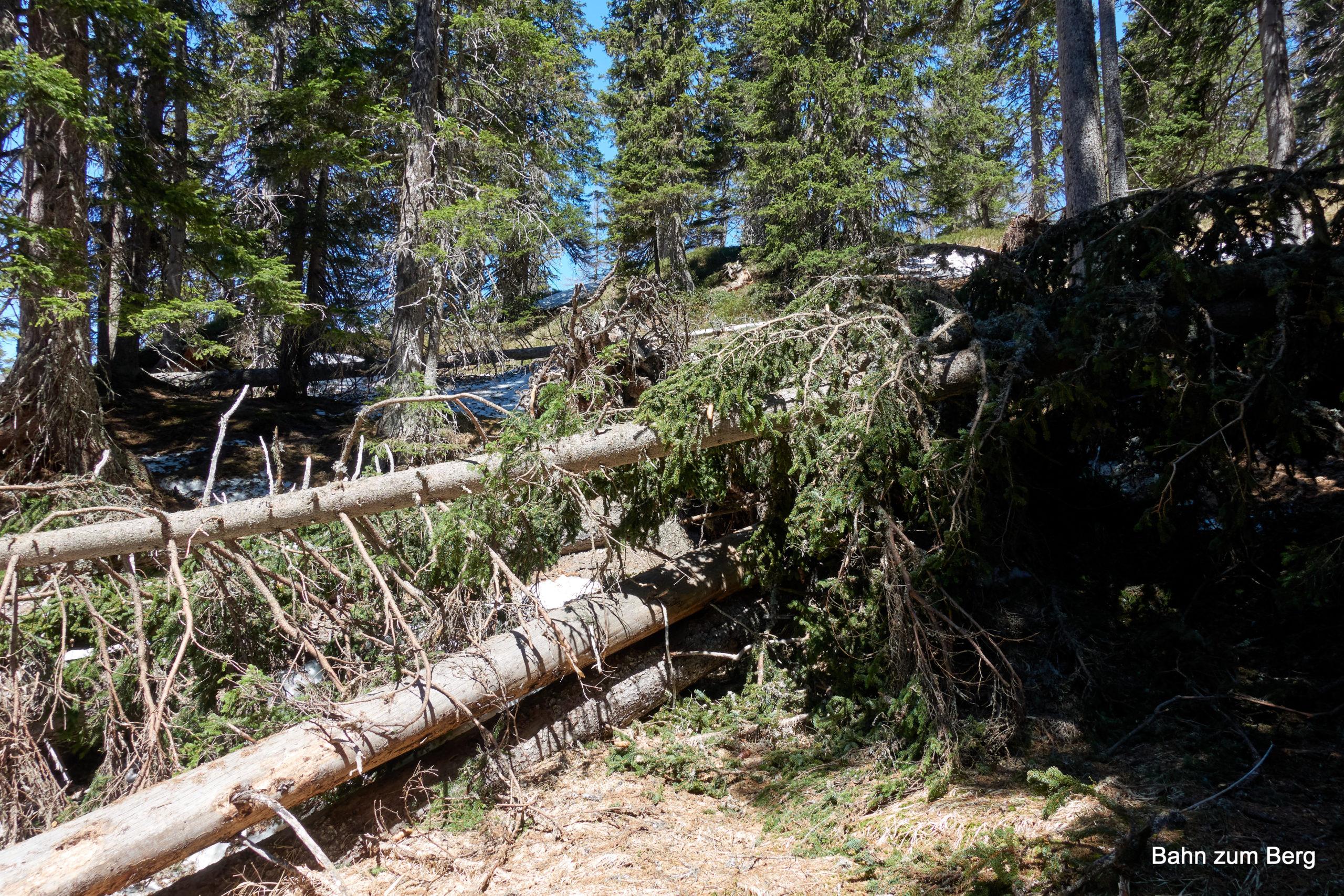 Umgestürzte Bäume verlegen den Weg. Foto: Martin Heppner