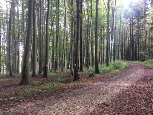 Auf die roten Markierungen an den Bäumen achten! Fotos Veronika Schöll