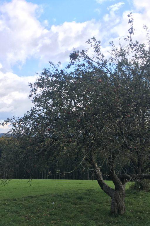 Stärkung und Apfelbaumwiese. Mirli. Fotos Veronika Schöll