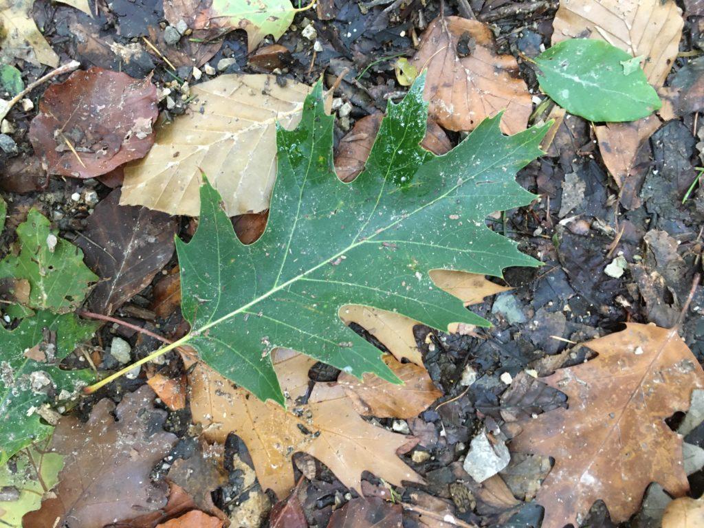 Geheimnisvolle Blätter. Foto Veronika Schöll