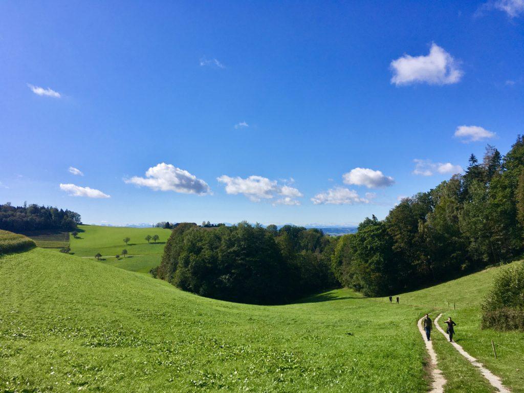 Die wunderbaren Rundungen der Mühlviertler Landschaft. Foto: Stefan Hochhold
