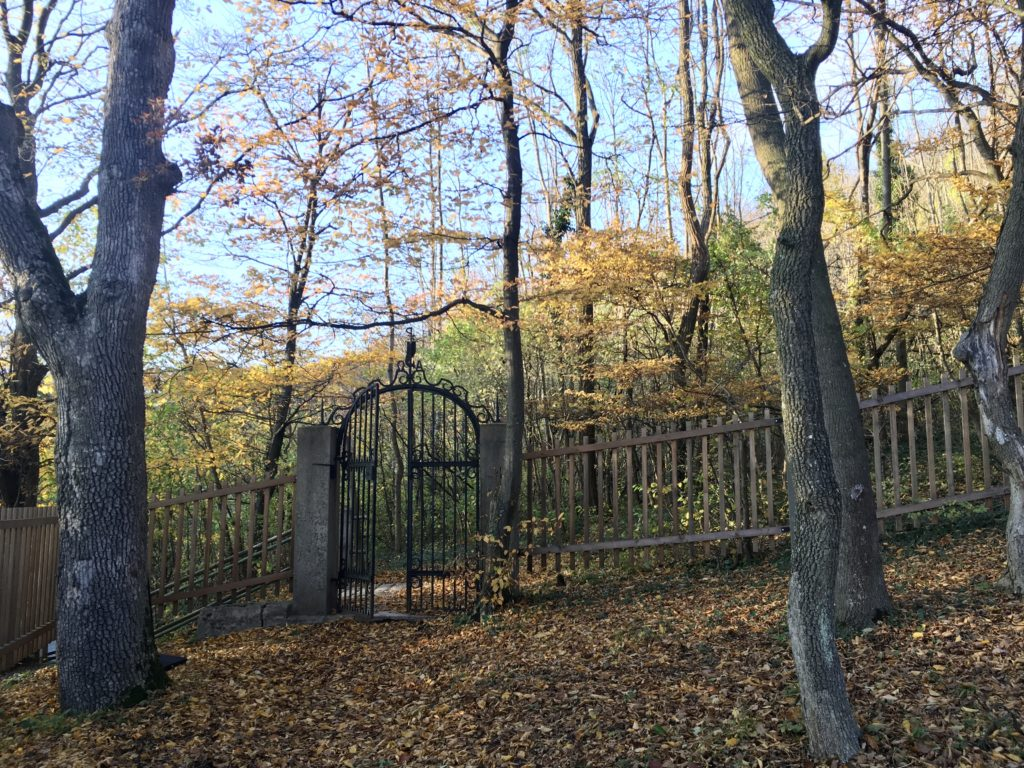 Kahlenberger Friedhof. Foto: Veronika Schöll