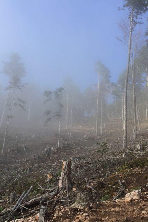 Nebel am Grafenbergweg