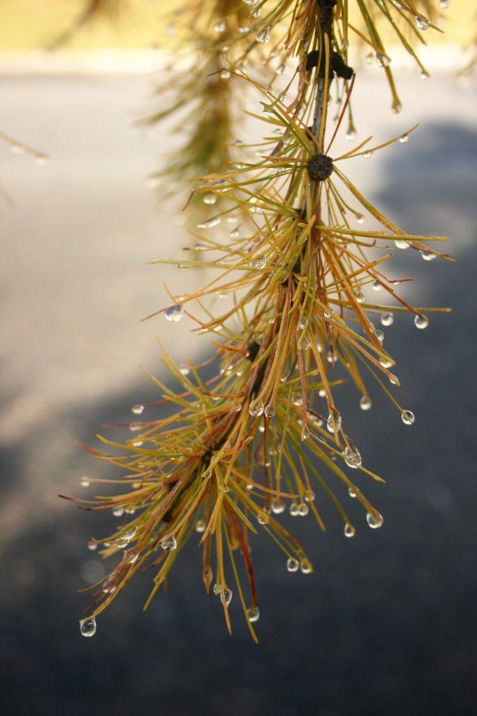 Natur genießen 1. Foto: Birgit Frank