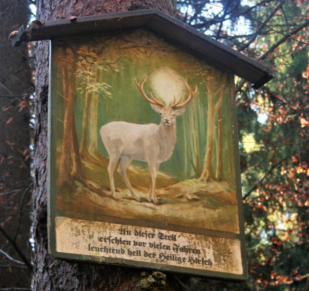 Weißer Hirsch. Foto: Birgit Frank