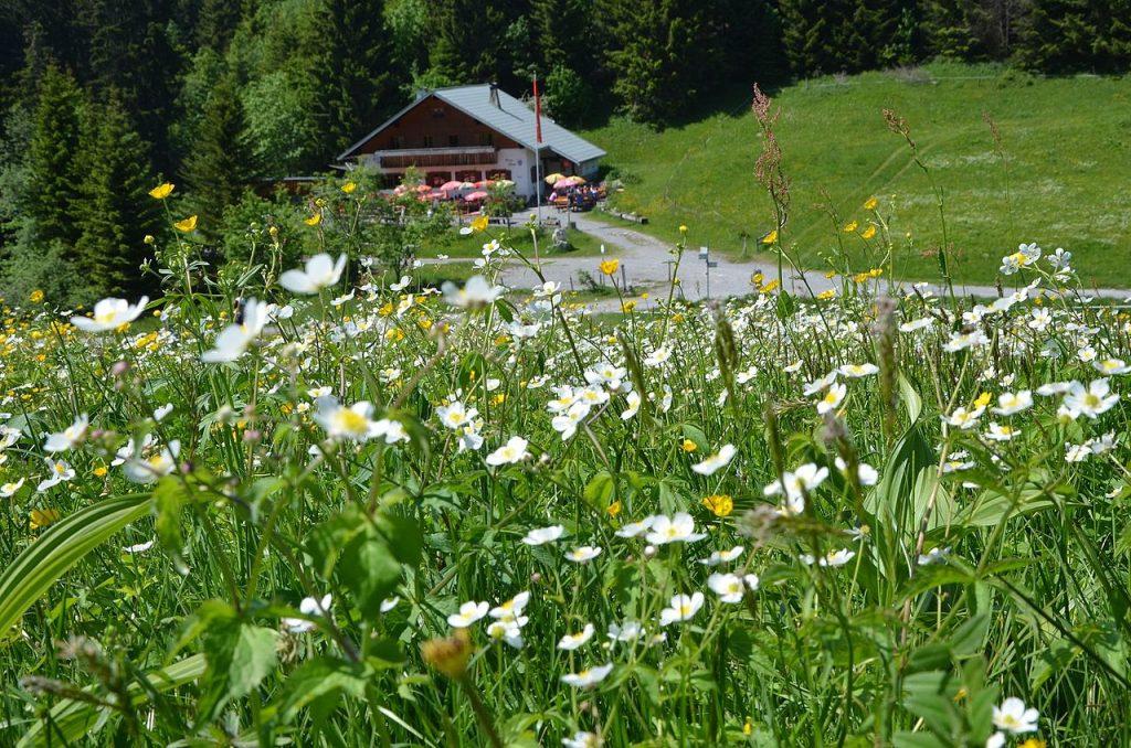 Emser Hütte von Weitem. Foto: Naturfreunde Vorarlberg