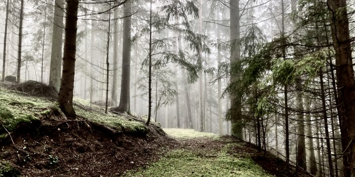 Wald bei Harterleiten, Kefermarkt. Foto: Stefan Hochhold