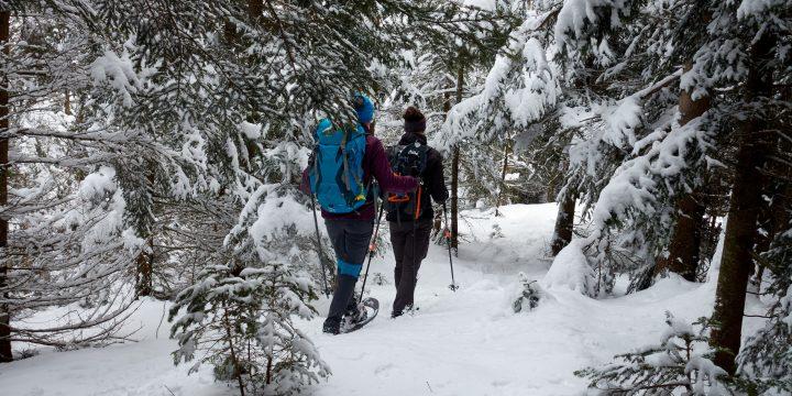 Im Winterwald zur Großen Scheibe. Foto: Martin Heppner