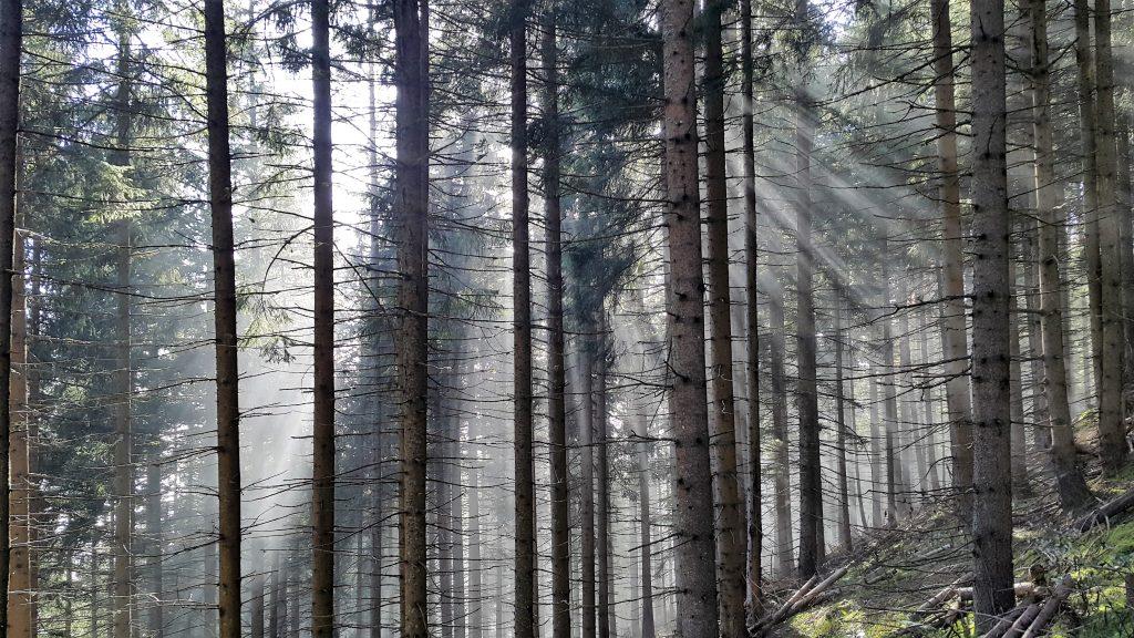 Wald Meßnerin