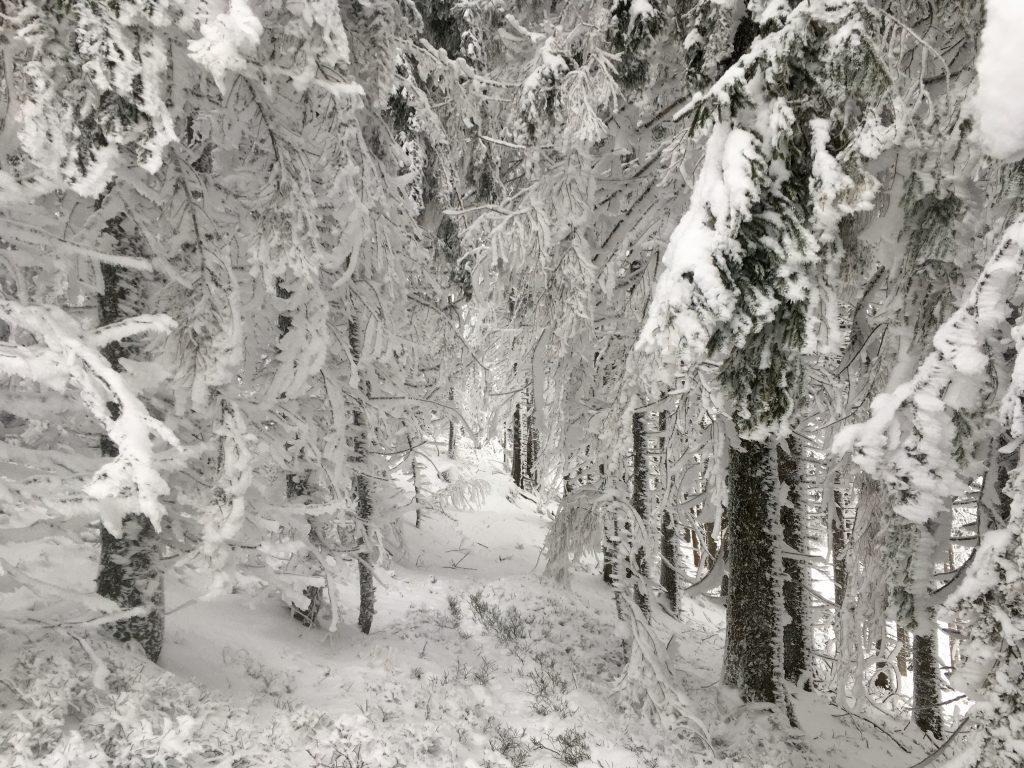 Wintermärchenwald zwischen Rosskogel und Kaarl. Foto Veronika Schöll