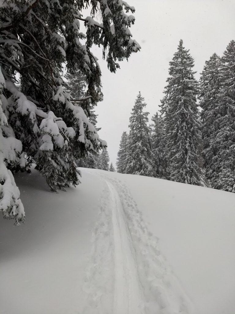 Aufstiegsspur nach Neuschnee. Foto: Nikolaus Vogl
