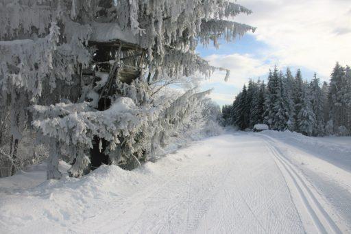 Winterlandschaft. Foto: Birgit Frank